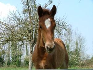 Haras de Blondel - Elevage de chevaux de sport en Normandie