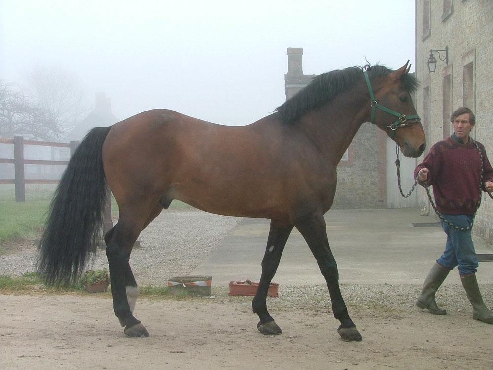 Calvaro 6233